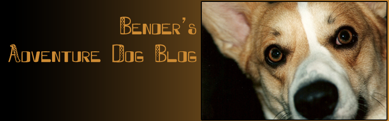 Bender's Adventure Dog Blog
