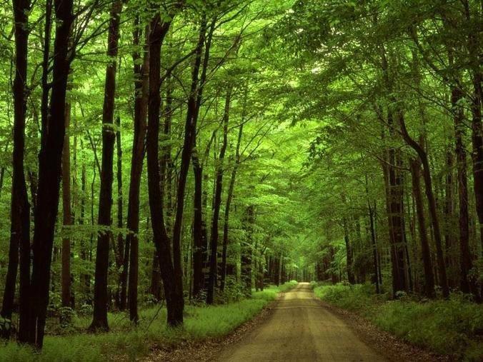 El bosque... El camino...