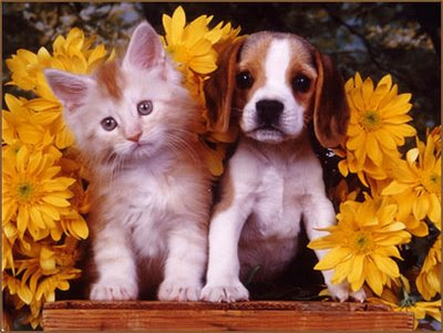 "essay about the differences and similarities of dogs and cats Let's look at a student's management of a comparison/contrast essay this essay, called ""the truth about cats and dogs,"" was written by a student named maria castillo."