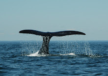 Right Whale Flukes
