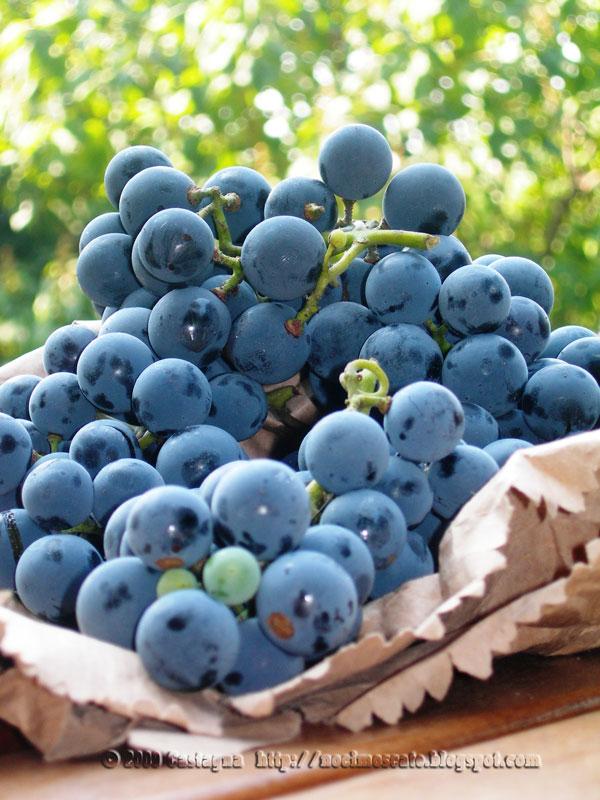 Noci moscate schiacciata con l 39 uva fragola for Sognare uva fragola