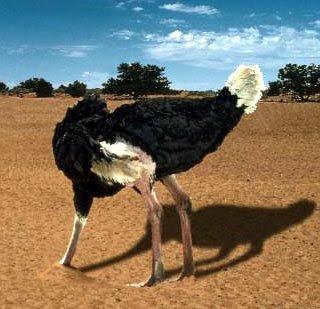 http://2.bp.blogspot.com/_7i3AwV5S9-U/R_a2t52OMQI/AAAAAAAAAqY/IXgGT3nFrt4/s400/avestruz.jpg