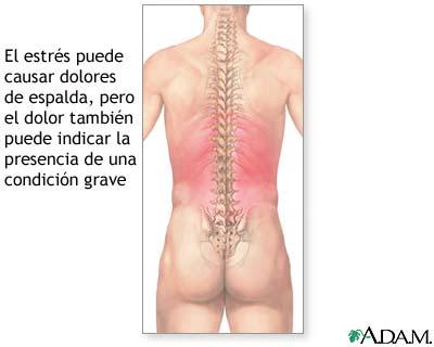 Los dolores en los riñones y las caderas al movimiento