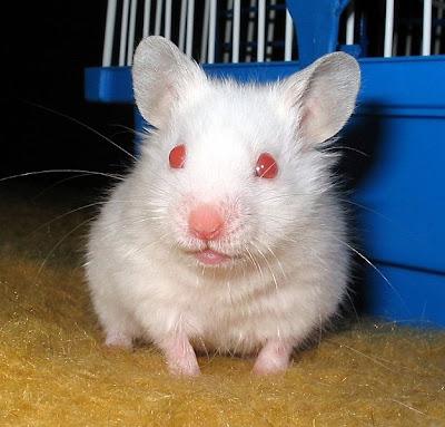 Hamsters Hams_03