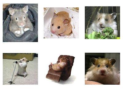 Hamsters Hams_14