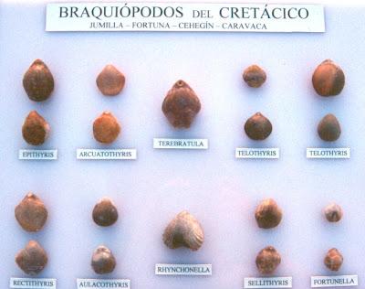 Braquiópodos fósiles Braq_01
