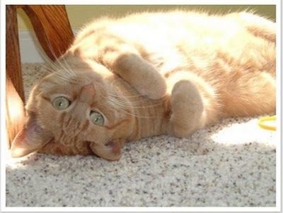 Razas de Gatos Rgat_10