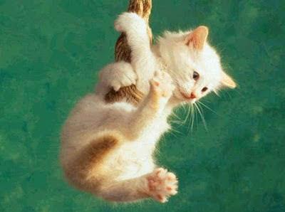 Sanidad del gatito Colgando