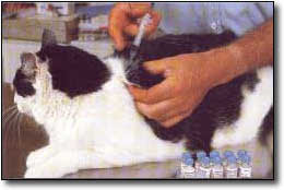 Sanidad del gatito Vacunasgatos2