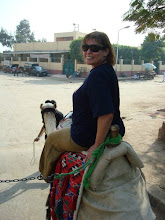 Camel Ride to Giza