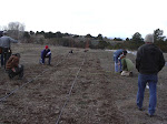 Laying out a tree planting grid.