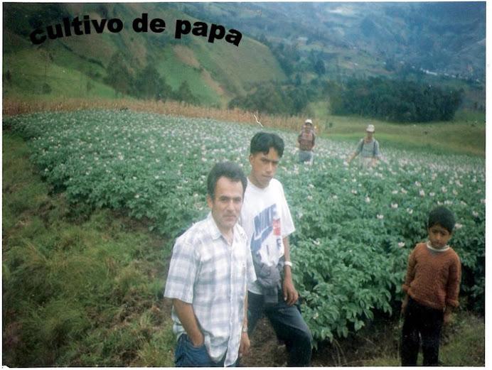 cultivo de papa y maiz