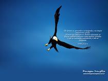 seja como aguia