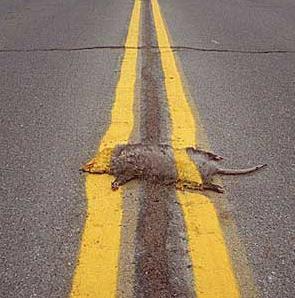 road_kill.jpg