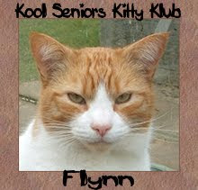 Flynn is proud to be a senior kitty.