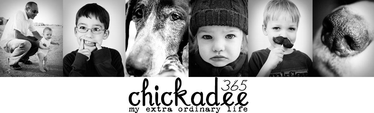 Chickadee 365