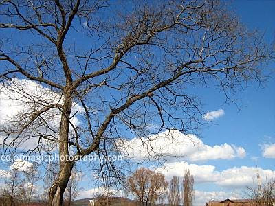 Bare trees and beautiful sky