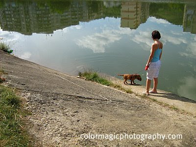 Little puppy watching the reflection in the water