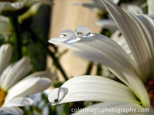 Raindrop pearls