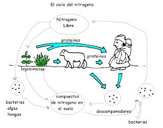 Dibujo Del Ciclo De Vida Del Hombre also Cristynaolguin blogspot together with  on abuso y maltrato en contra de la mujer monografias