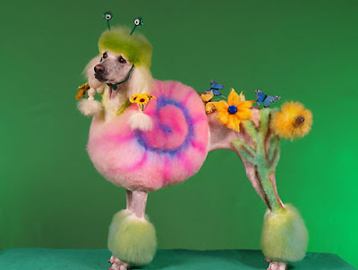 Studio marcy marcy lamberson extreme dog grooming poodle art extreme dog grooming poodle art winobraniefo Image collections
