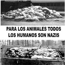 Respeto animal