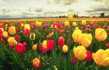 Receba as flores