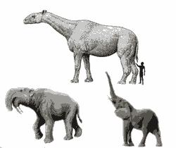 Mamalia Tumbuh Besar Setelah Dinosaurus Punah