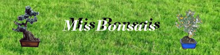 MIS BONSAIS