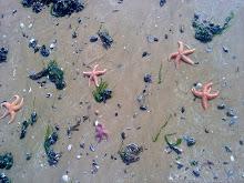 Ciel de plage vendéenne - avril 2010