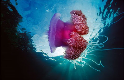 Beautiful Underwater Photos