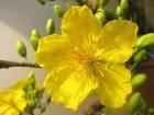 Mừng Xuân Mới