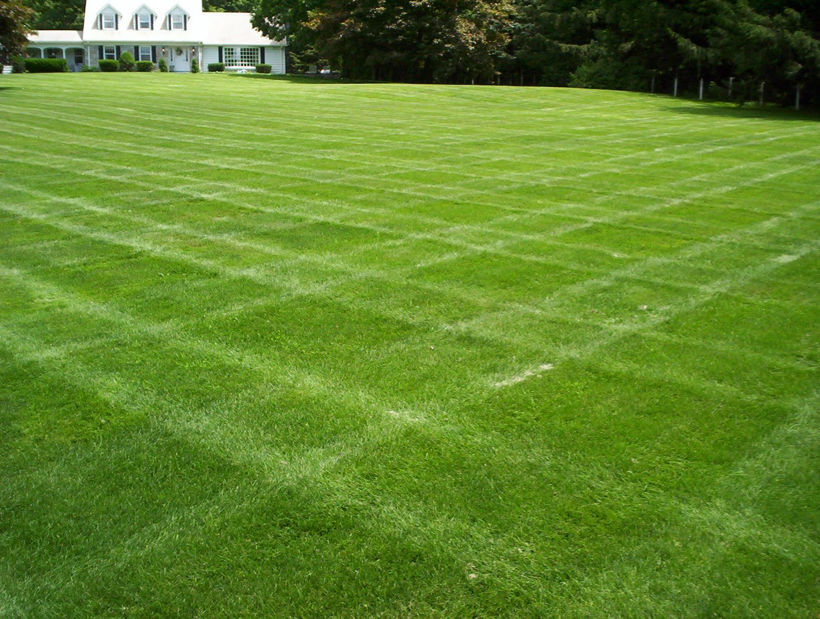 Dutch touch blog stay informed selecting grass for your for Short landscape grasses