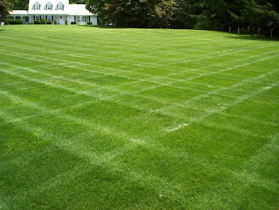 beautiful lawn bluegrass dutch touch landscaping services