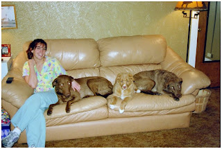 three happy dogs and owner on beige leather couch dutch touch inc