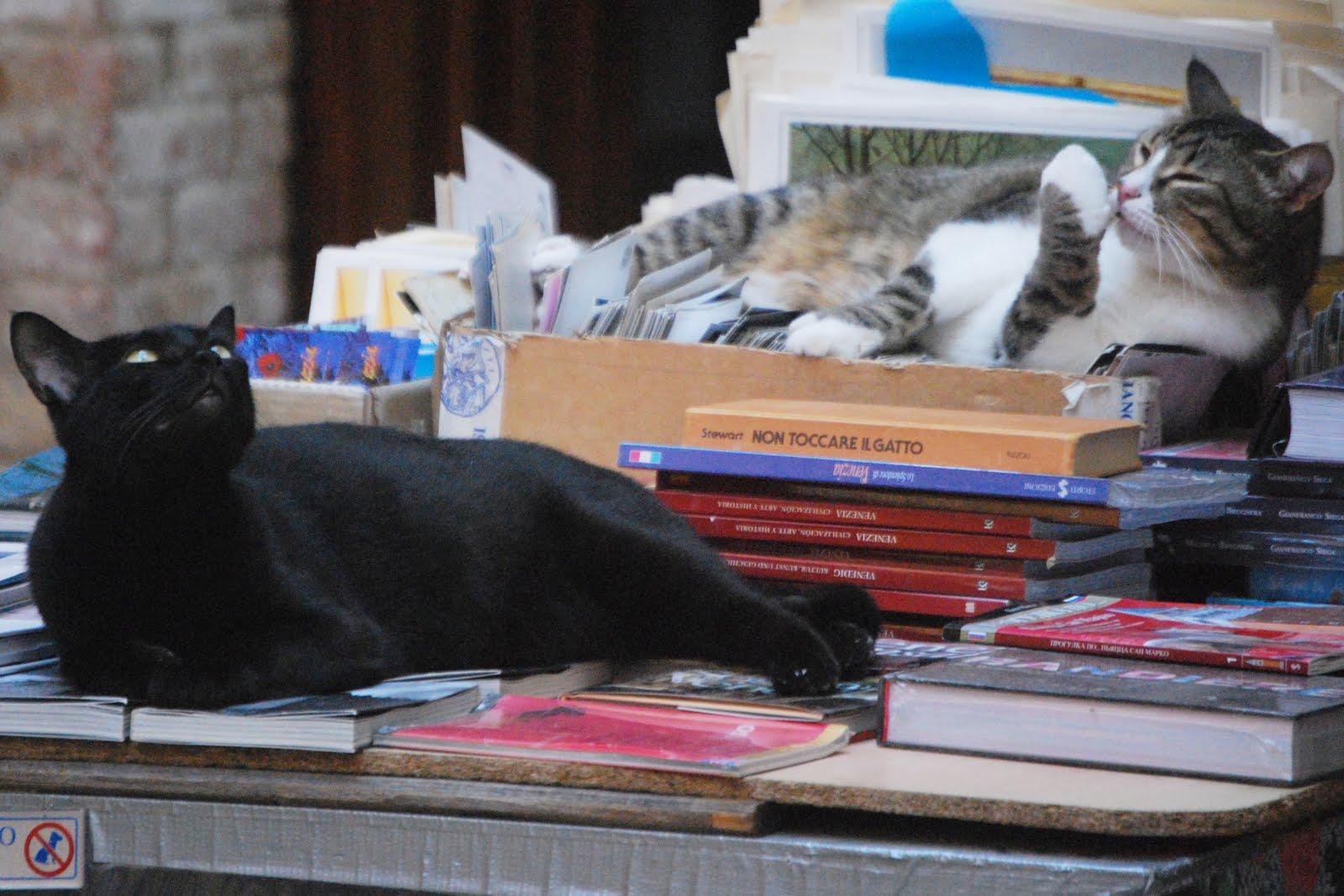 Libreria Acqua Alta Gatti