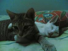 CICAQ & PUTEH : mengajar aku erti persahabatan