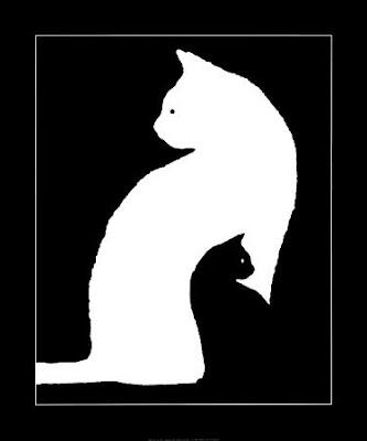 macka koja ponavlja za tobom
