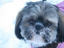 My Fur Baby