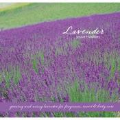 My Lavender Book