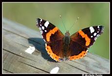 Eluana, Johnny e la farfalla