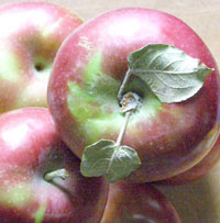 macintosh apples for fresh apple cake recipe