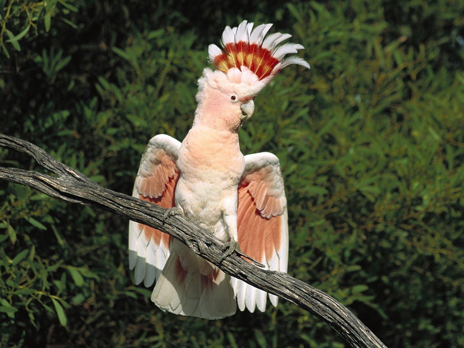 http://2.bp.blogspot.com/_85h0rx9KpUw/TAYUSsfr16I/AAAAAAAACJE/4bwEiUojjqY/s1600/010_Baby_Birds_DGN.jpg