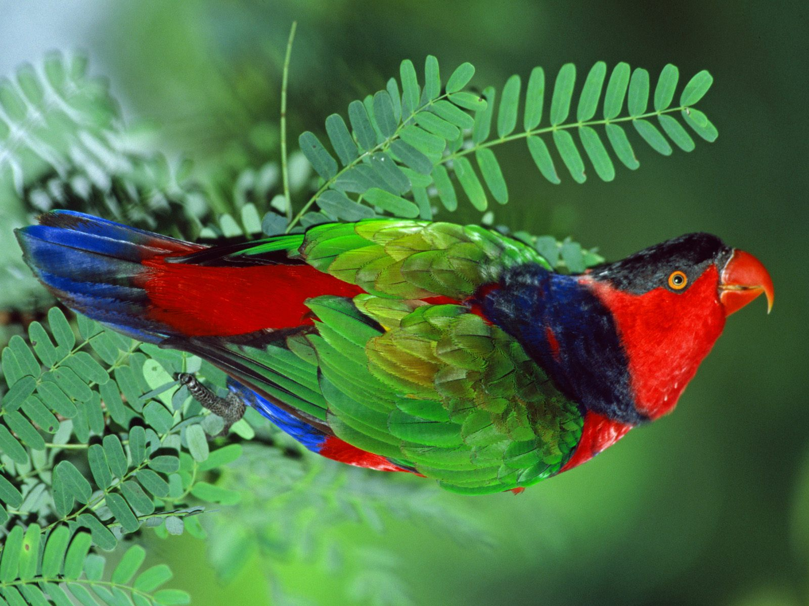 BEAUTIFUL WILD ANIMALS Beautiful Birds Wallpaper