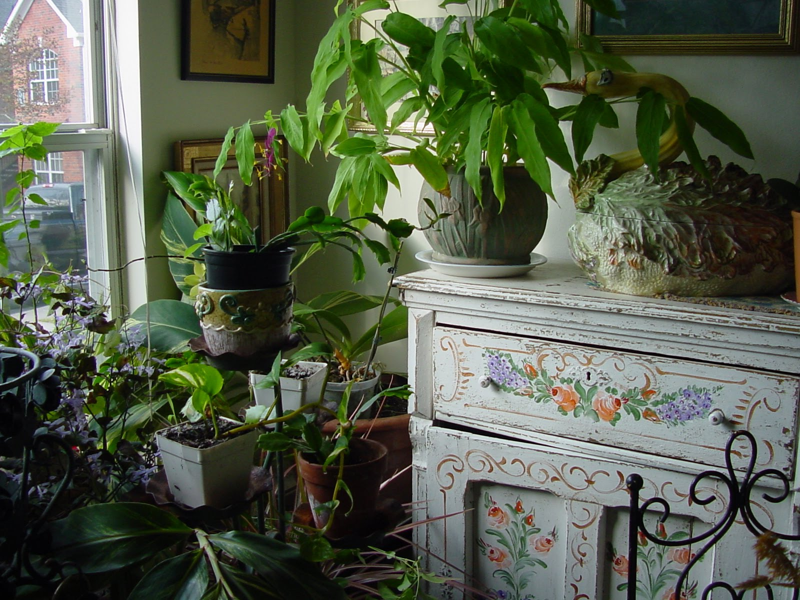 Miss betsy 39 s tee tiny tennessee kitchen my winter garden for Home design with indoor garden
