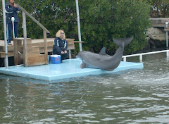 A dolphin 'Caught in the act' at the Dolphin Research Center in Marathon.