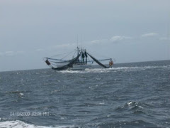 In the Atlantic for 5 hours, we saw one boat, a Shrimper.  We had to change course to let her pass!