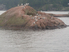 Seagulls enjoying a pink rock on a rainy afternoon