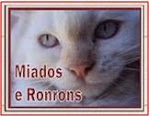 Visitem Miados e Ronrons: