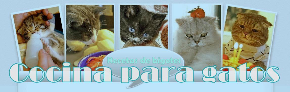 Recetas de bigotes: fotoblog de cocina para tu gato